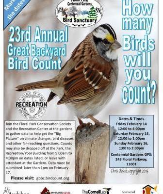 Great Backyard Bird Count 2020
